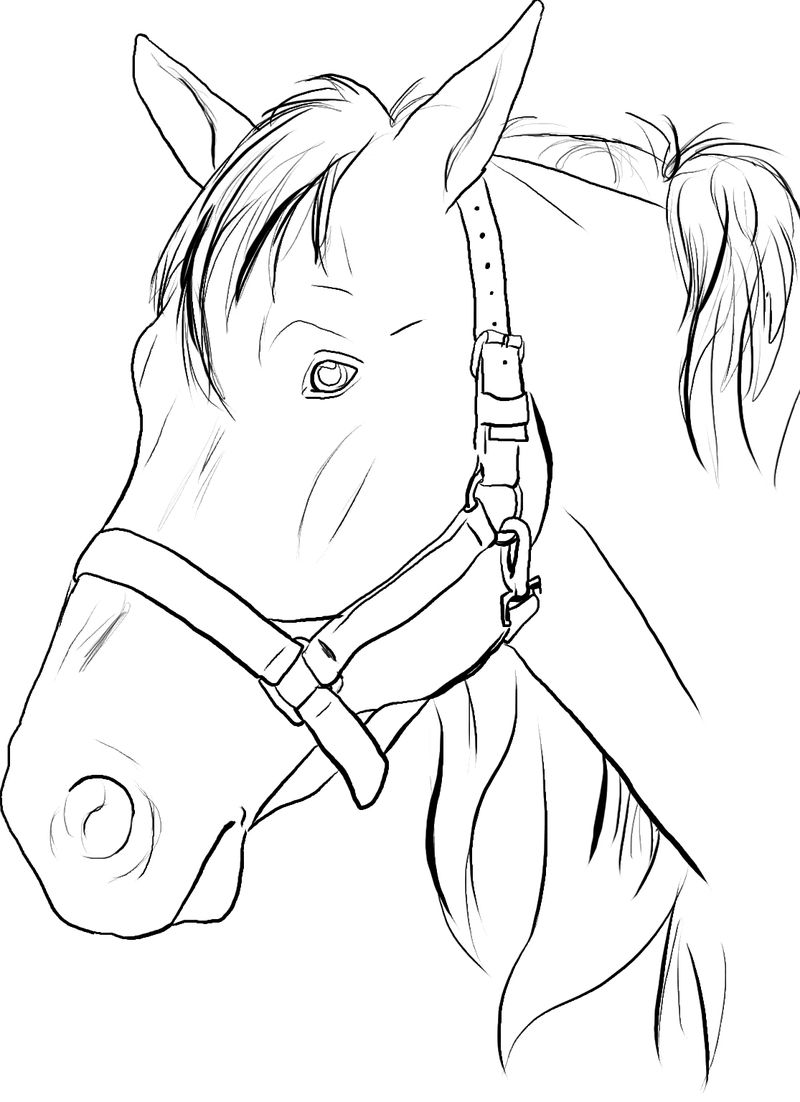 Head Of Horse Coloring Page