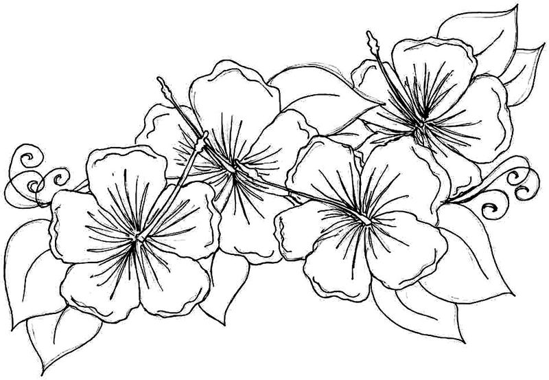 Hibiscus Flower Coloring Pages 001