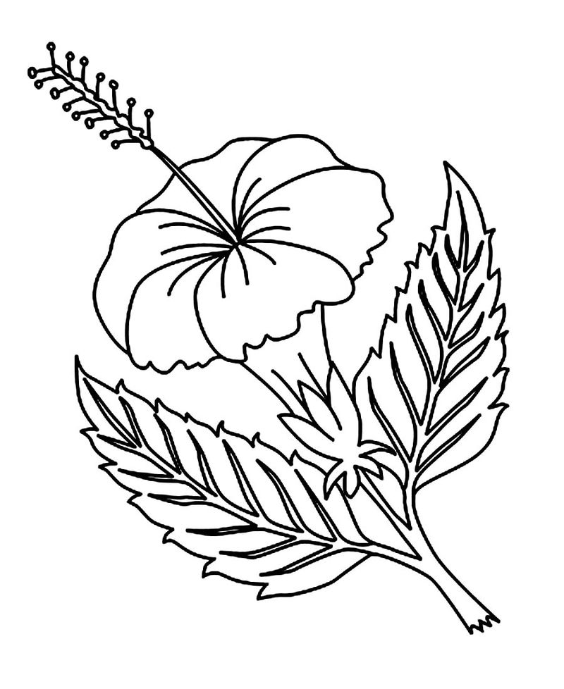 Hibiscus Flower Coloring Pages Printable 001