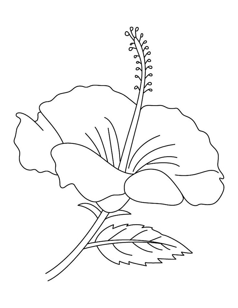 Hibiscus Flower Coloring Pages To Print 001
