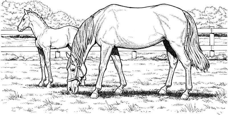Horse Color Pages Grass 001