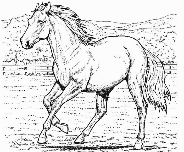 Horse Color Pictures Printable 001