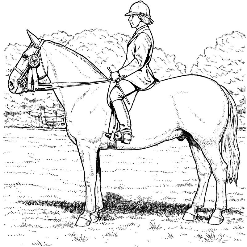 Horse Color Sheet To Print