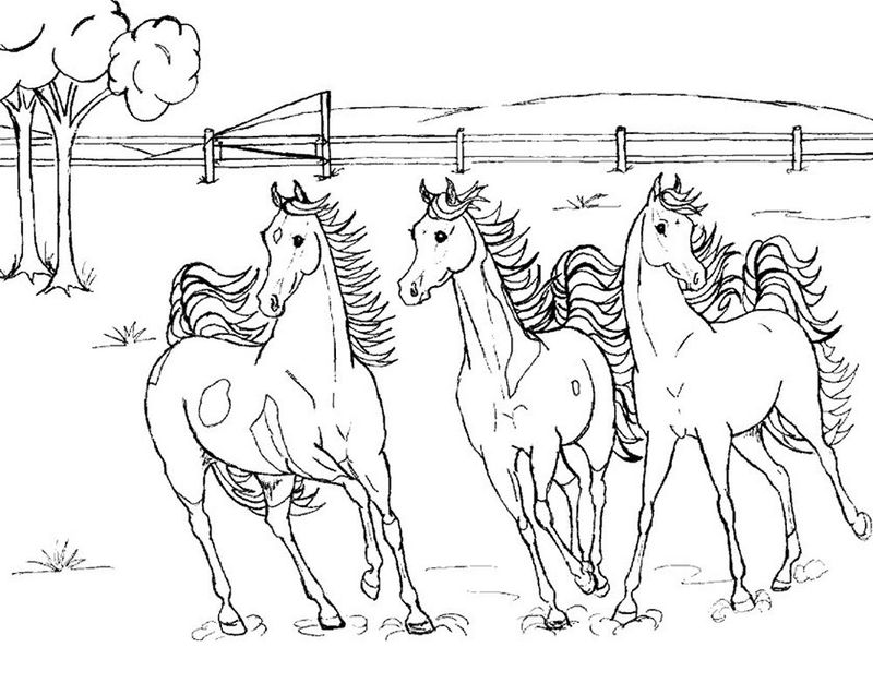 Horse Coloring Pages Online