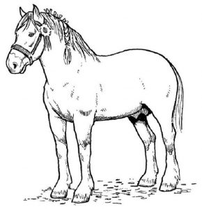Horse coloring pages to print