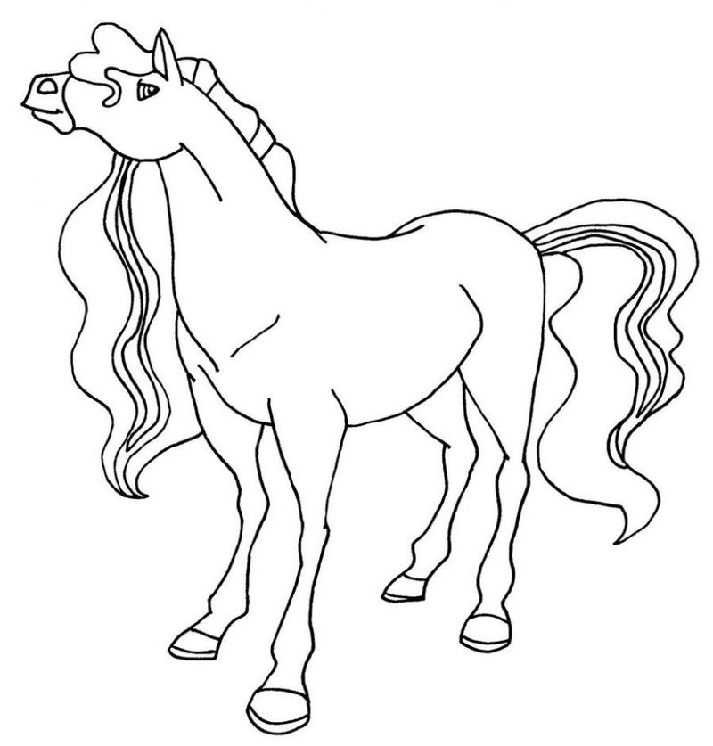 Horse Outline Coloring Page