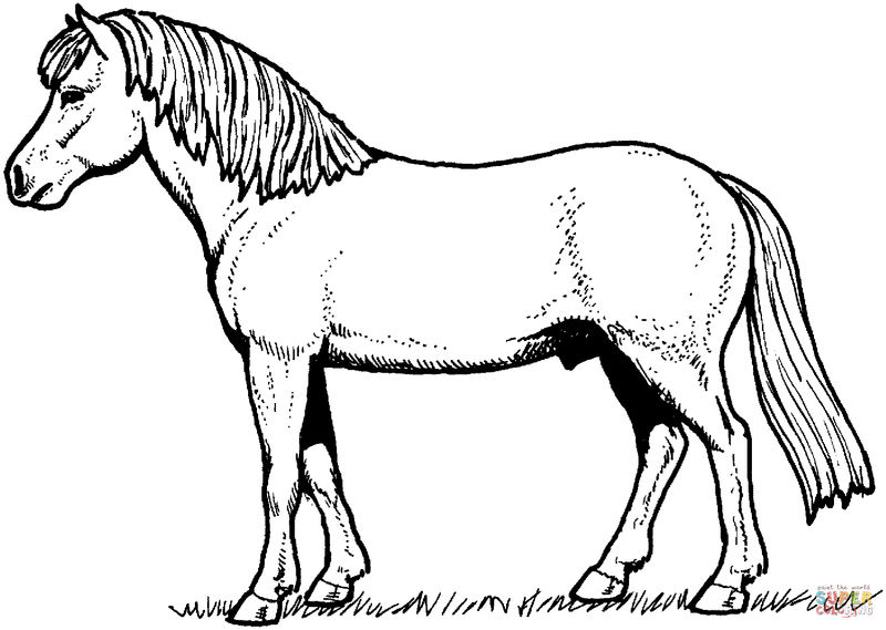 Horse Pictures For Kids For Coloring