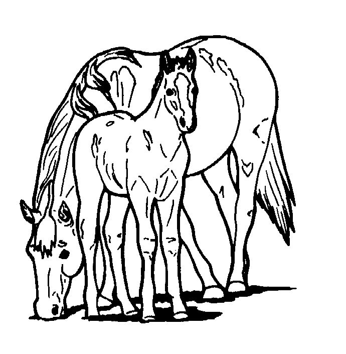 Horse Printable Coloring Pages