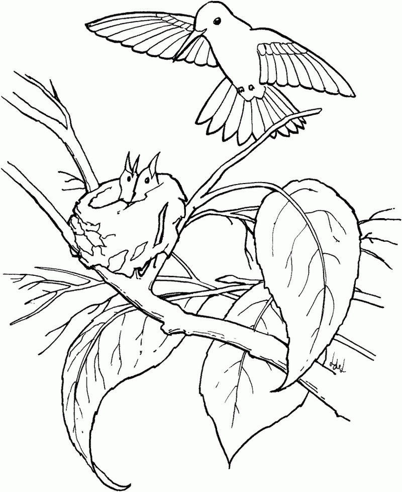 Hummingbird Nest Animal Coloring Pages