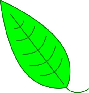 Images of leaf for kids clip art