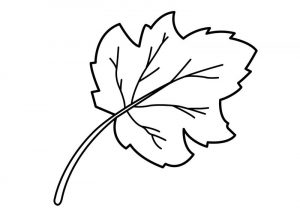 Images of leaf for kids coloring printable