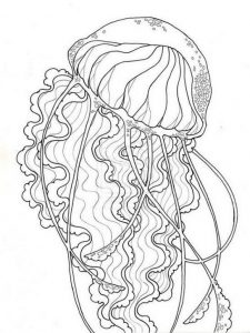 Jellyfish coloring pages for adults
