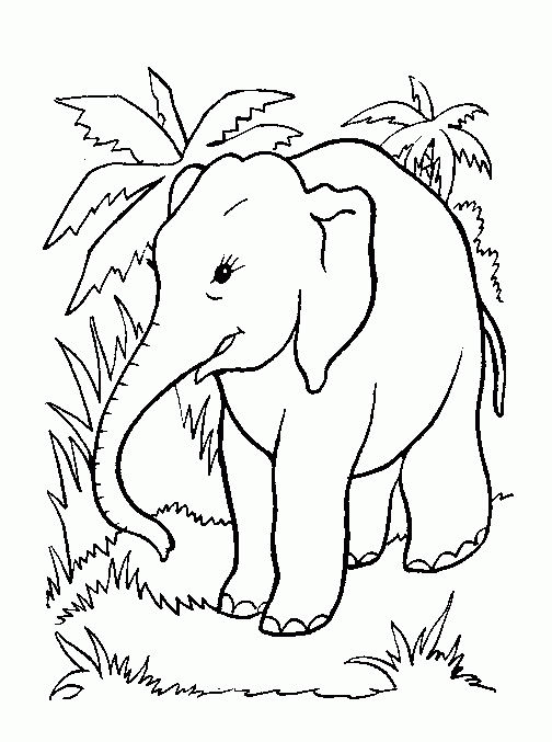 Jungle Coloring Pages For Preschoolers - Coloring Sheets