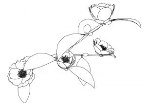 Kantubaki flower coloring page