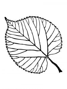 Leaf coloring new