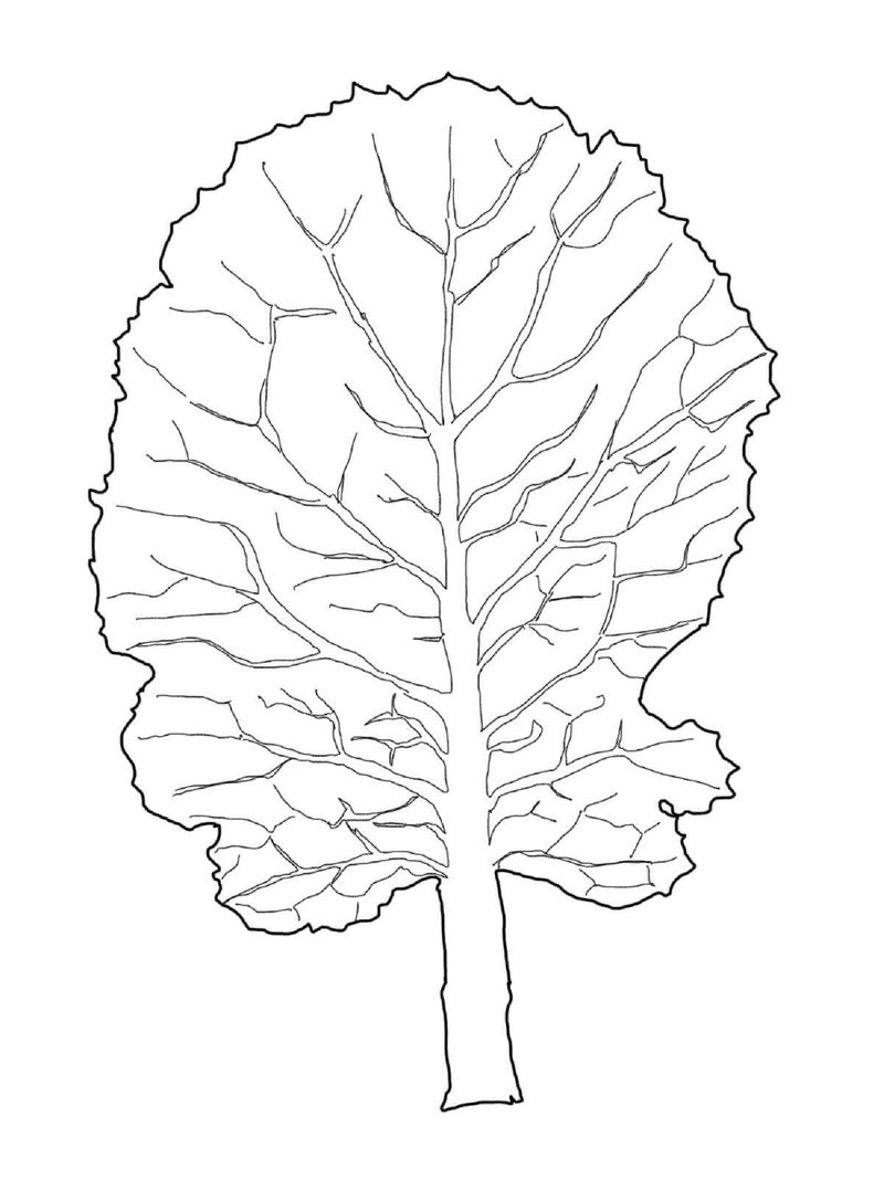 Leaf Coloring Page Collard