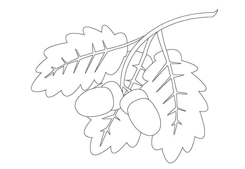 Leaf coloring page easy 001
