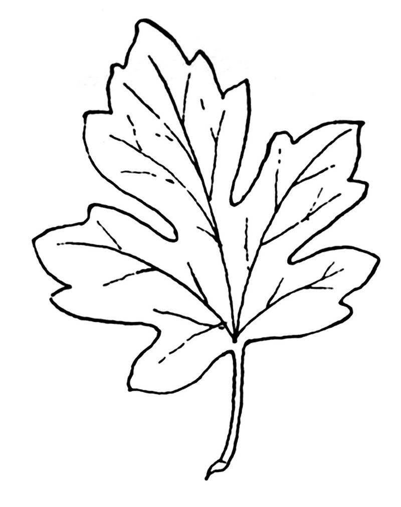 Leaf Coloring Page Simple 001