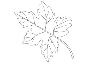 Leaf coloring pages big 001