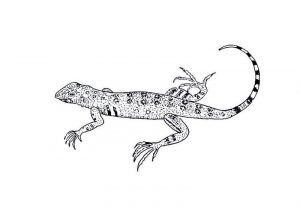 Lizard coloring pages free for kids