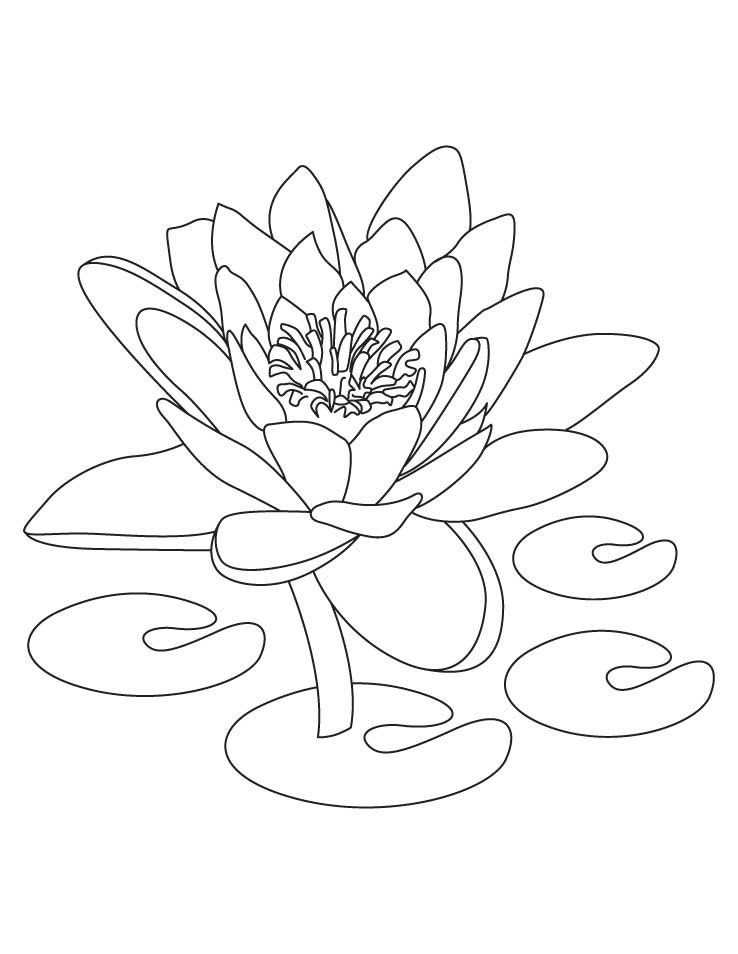 Lotus Coloring Pages For Kids 001