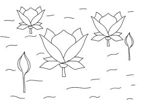 Lotus flower coloring pages images 001
