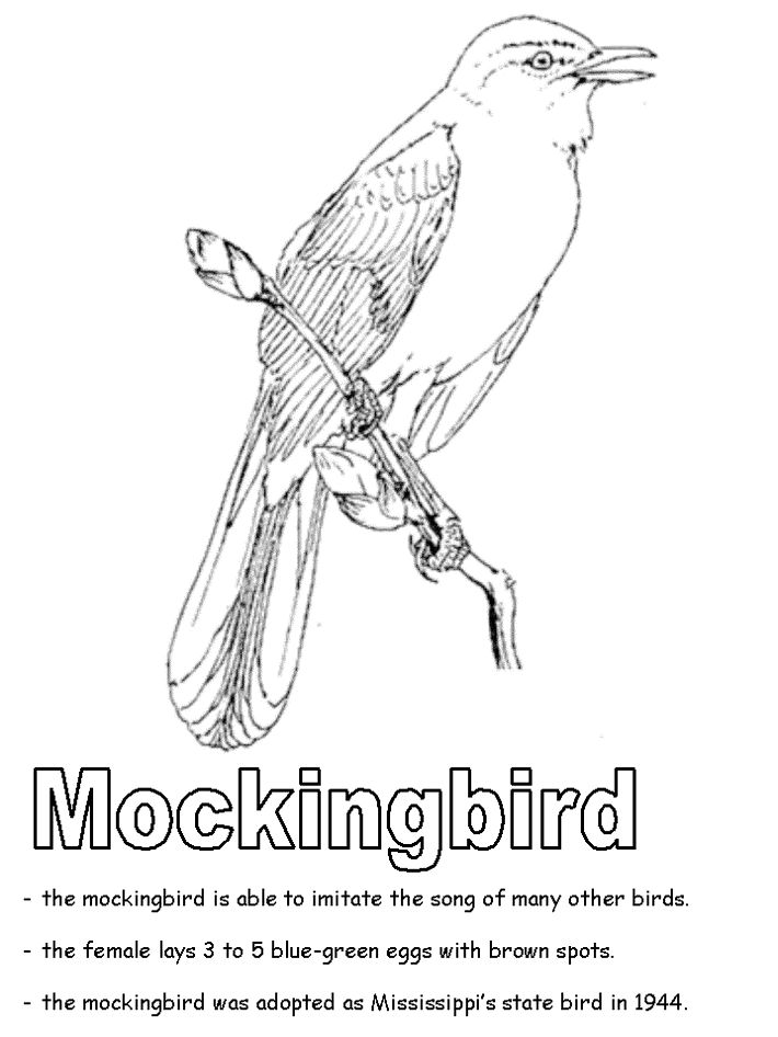 Mockingbird Florida Colouring Page