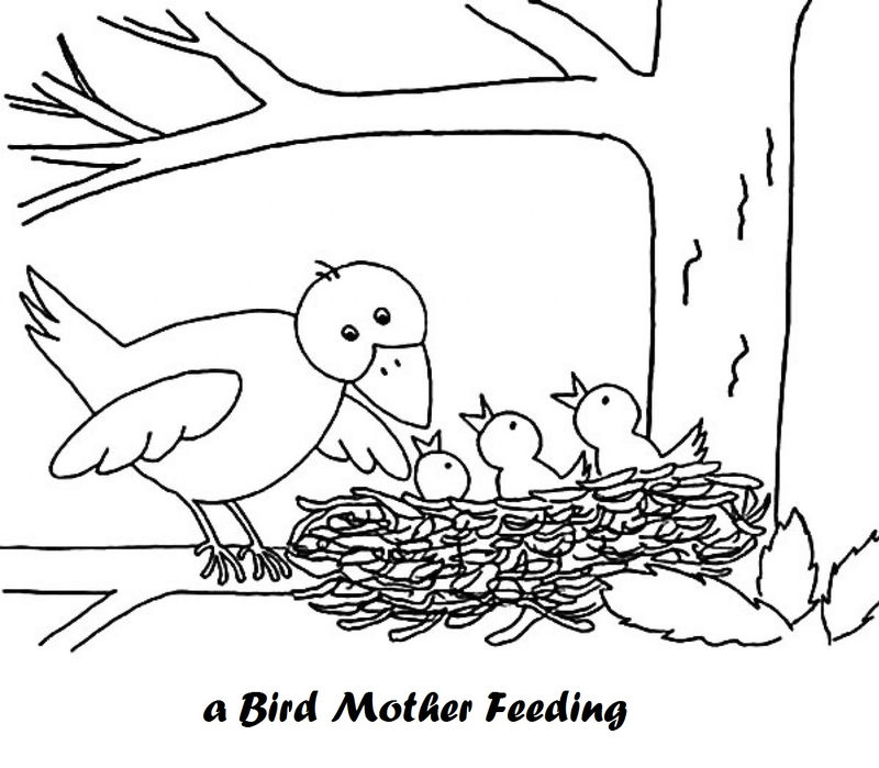 Mother Bird And Babies In Bird Nest Coloring Pages