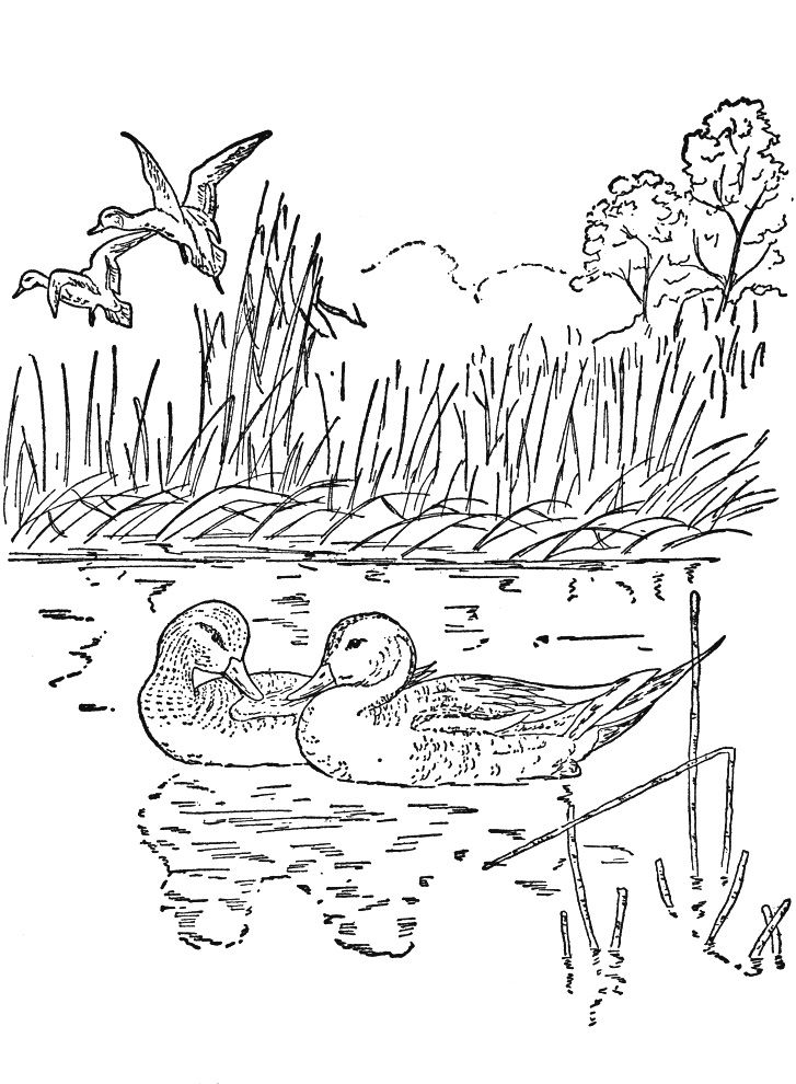 Nature Coloring Pages For Adult - Coloring Sheets