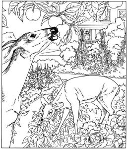 Nature coloring pages for adults 001