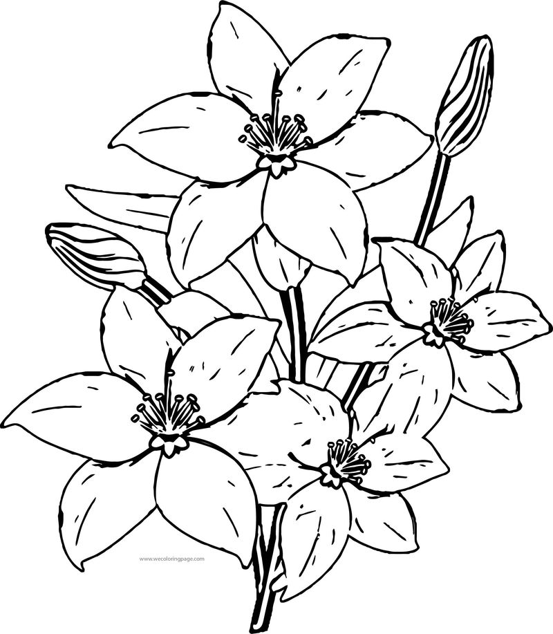 Nice Flower Coloring Page