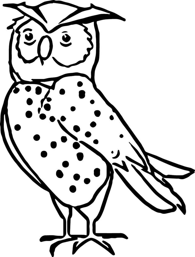 Nocturnal Animal Owl Coloring Page