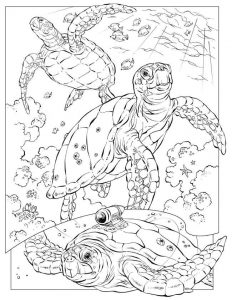 Ocean animal coloring pages for kids 001