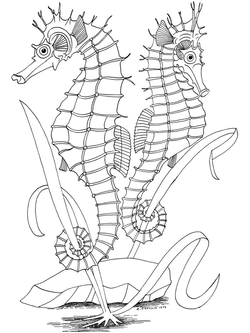 Ocean Coloring Pages For Kids 001