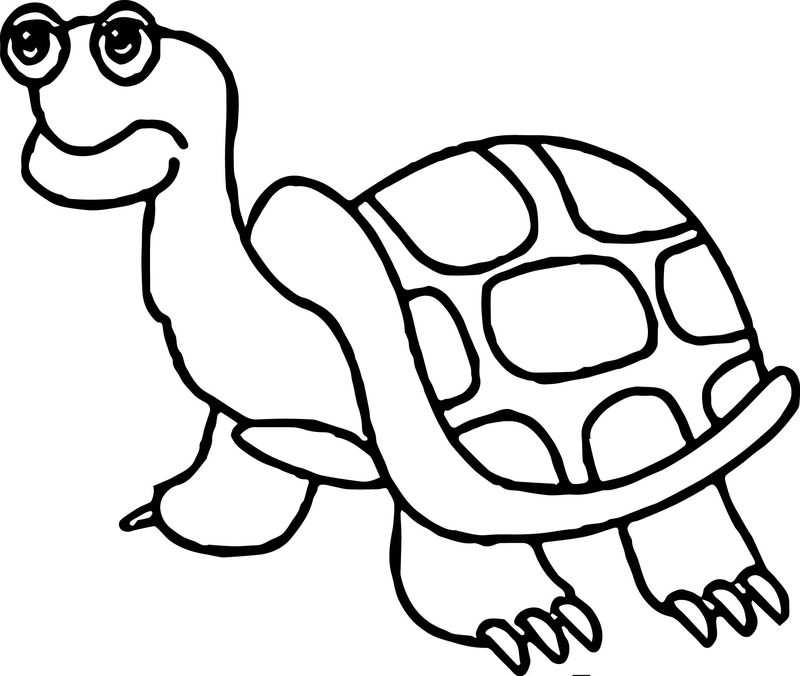 Old Tortoise Turtle Coloring Pages