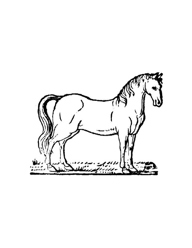 Online Horse Coloring Pages