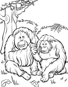 Orangatan zoo animals coloring pages