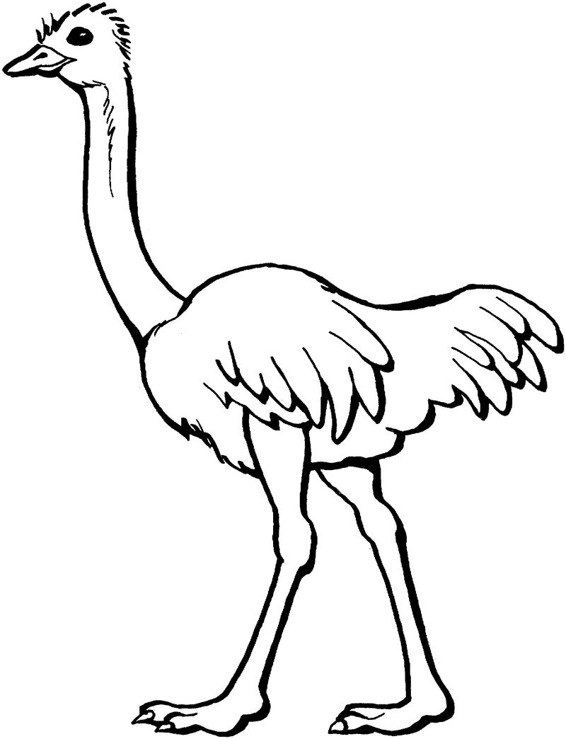 Ostrich Coloring Pages For Kids 001
