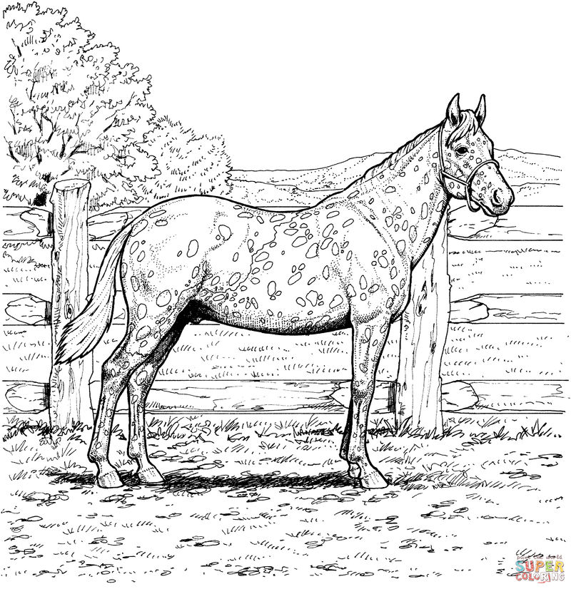 Outdoor Horse Scene Coloring Page