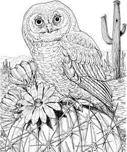 Owl coloring pages for adult