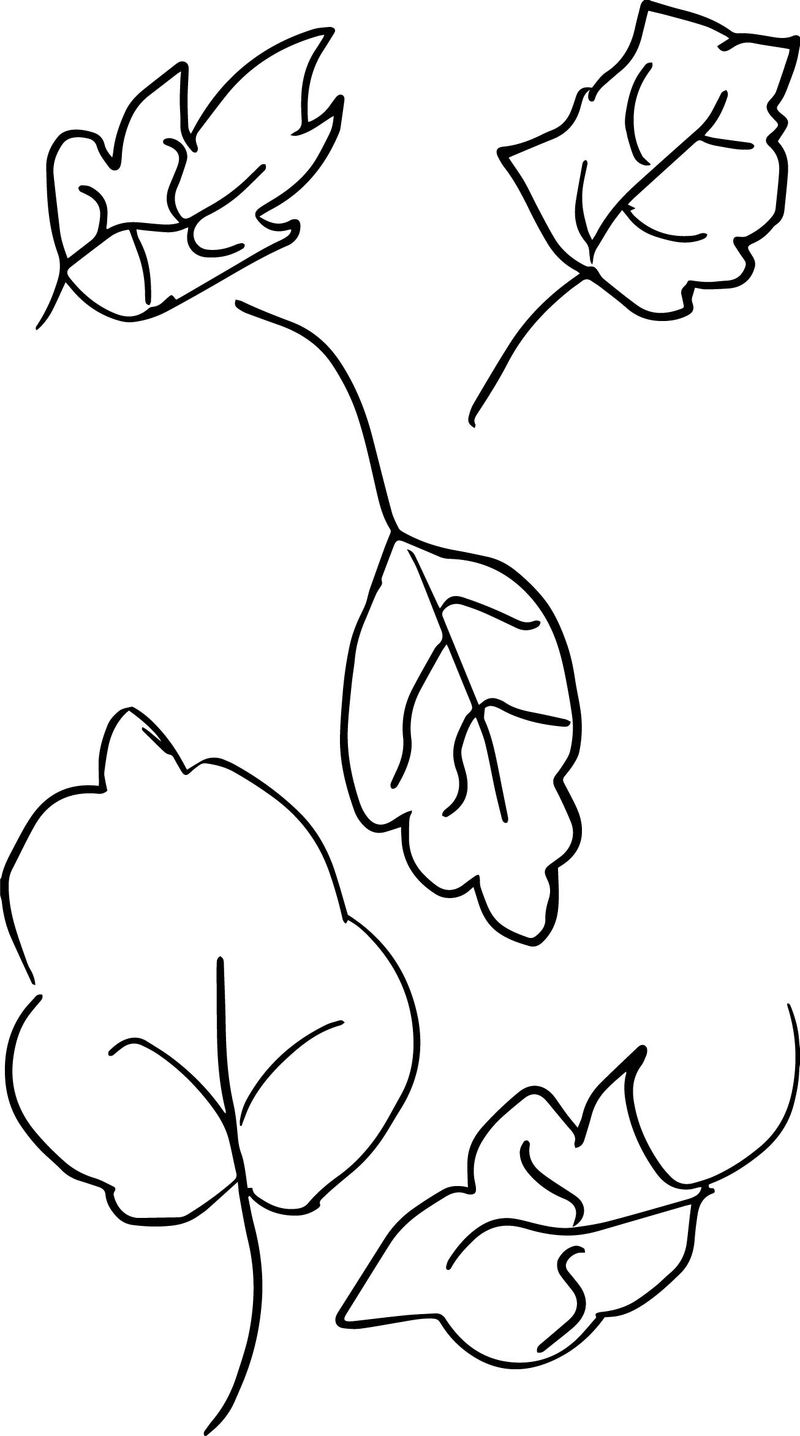 Own Drawing Sketch Leaf Coloring Page 1