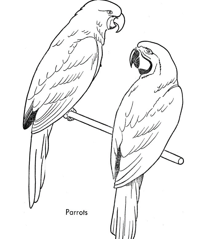 Parrots Coloring Pages For Kids