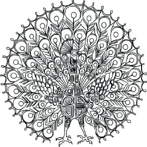 Peacock coloring pages for adults