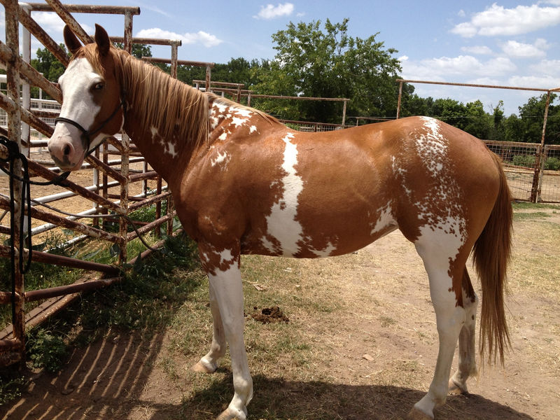Pictures Of Horse For Kids Brown