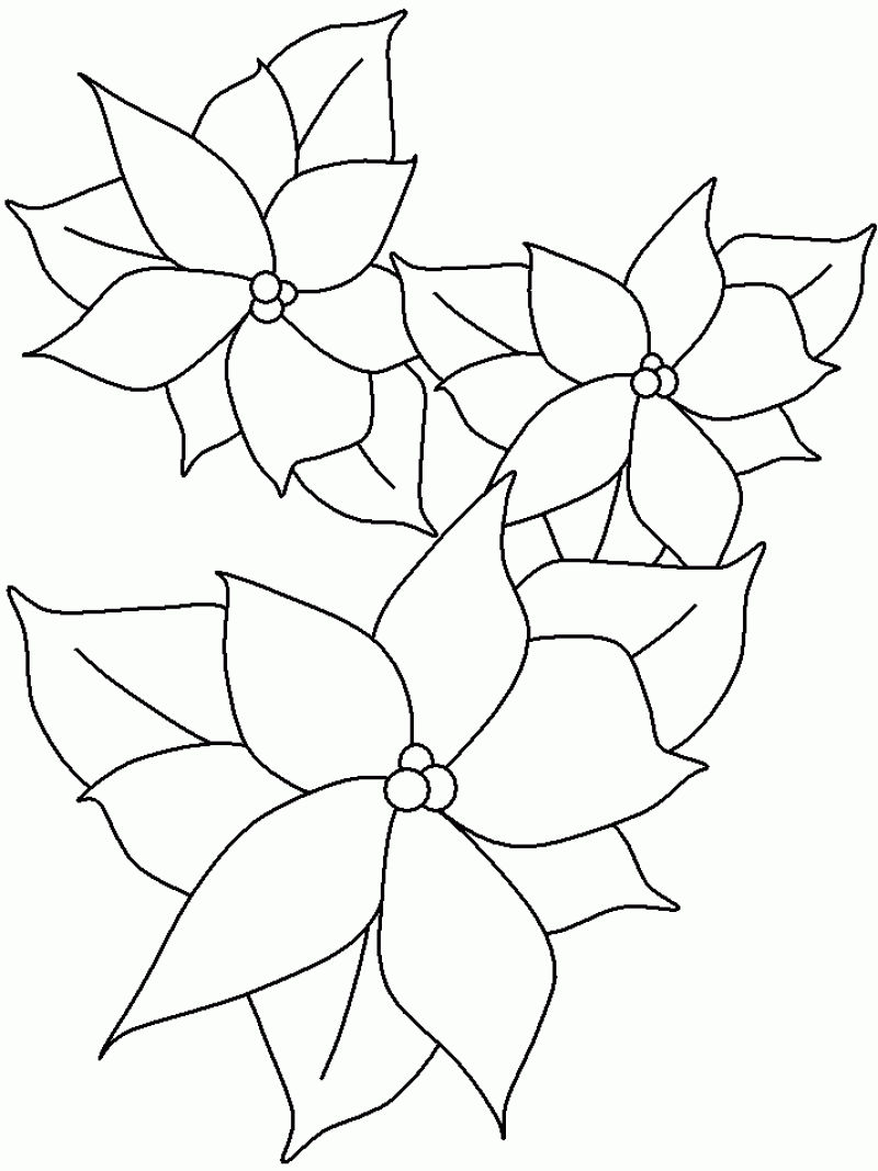Poinsettia Coloring Pages For Kids