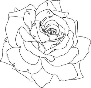 Pretty flower coloring pages for adults