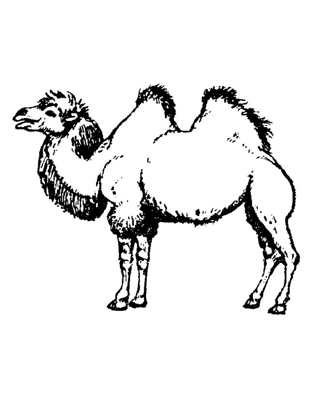 Printable Camel Coloring Pages For Kids