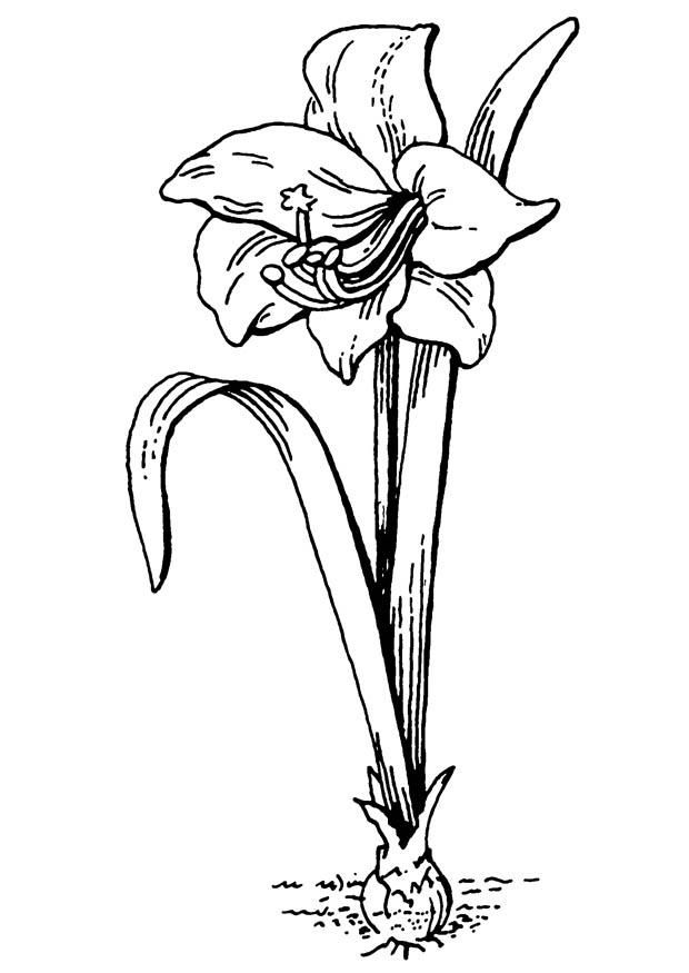Printable Flowers To Colour 001
