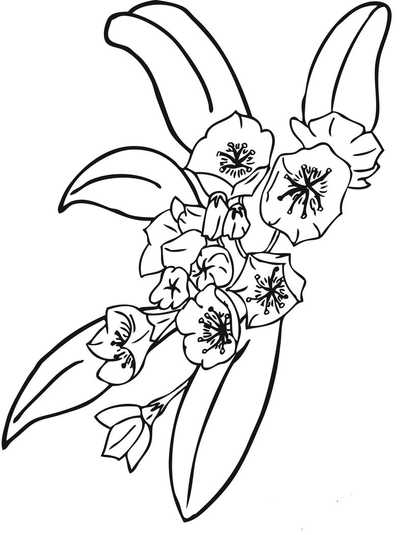 Printable Pictures Of Flowers To Color 001