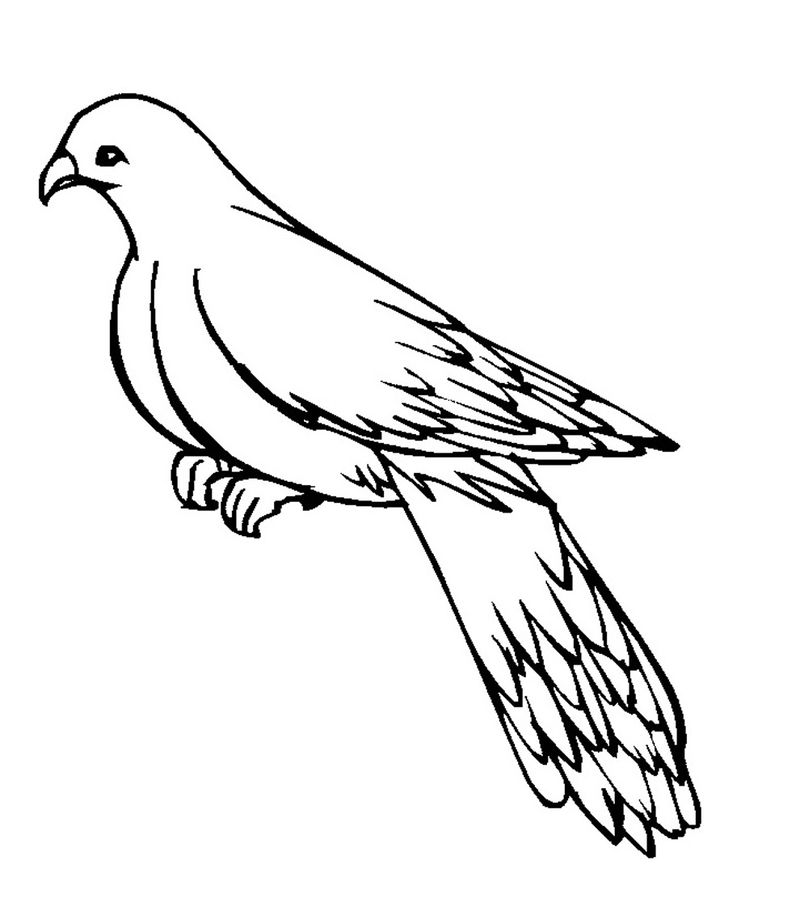 Printable Pigeon Coloring Pages 001